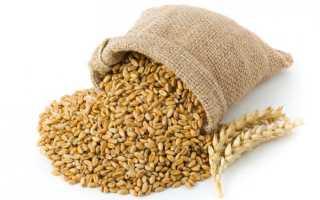 Самогон из пшеницы – рецепт браги, способ проращивания зерен и лучшие рецепты алкоголя