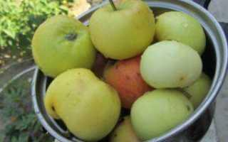 Квашеная капуста с яблоками – рецепты с медом, уксусом, клюквой и морковью