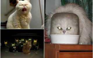25 фотографий о том, что коты – это пришельцы с другой планеты