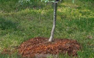 Саженцы плодовых деревьев – подготовка и реанимация растений, как провести посадку и ухаживать за растениями?