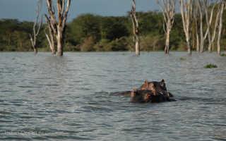 Национальный парк Озеро Найваша, Lake Naivasha National Park – Найваша