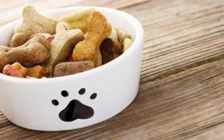 Собака мальтипу – как правильно ухаживать за мини питомцем и чем его лучше кормить?