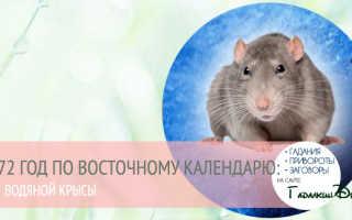 Год Крысы – особенности характера металлической, водяной, деревянной, огненной и земляной Крысы