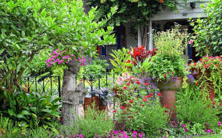 Многолетние цветы для дачи – самые лучшие и неприхотливые цветы для клумбы