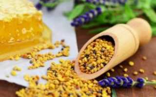 Пчелиная пыльца – полезные свойства, польза и вред. Как принимать пыльцу пчелиную?
