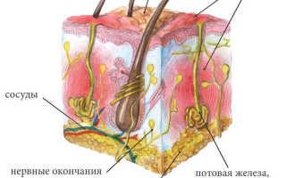 Гидраденит (под мышкой, паховый) – как лечить сучье вымя? Антибиотики при гидрадените