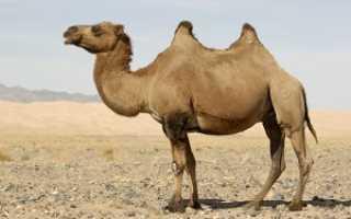 Одеяло из верблюжьей шерсти – как выбрать, рейтинг лучших, как ухаживать, стирать и реставрировать?
