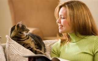 20 котов, которые сидят, как люди и не понимают – чему мы удивляемся?