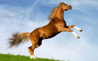 Год Лошади – особенности характера металлической, водяной, деревянной, огненной и земляной Лошади