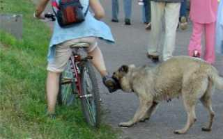 Ультразвуковой отпугиватель собак – как выбрать прибор и проверить его работу?