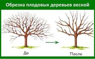 Обрезка деревьев – как правильно проводить процедуру, и какие инструменты лучше использовать?