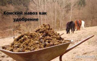 Конский навоз как удобрение – как применять на огороде, польза и вред