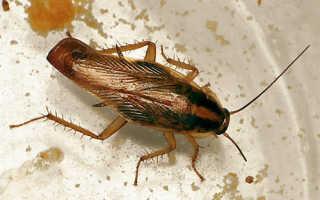 Тараканы в квартире и доме – как избавиться, какое средство самое лучшее?