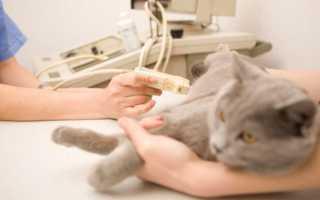 Сколько ходят беременные кошки – календарь беременности, что такое ложная беременность?