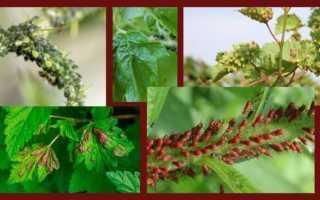 Борьба с тлей на садовом участке – эффективные препараты и народные средства