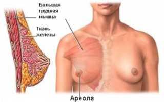 Строение молочной железы у женщин, анатомия женской груди, уход за грудью