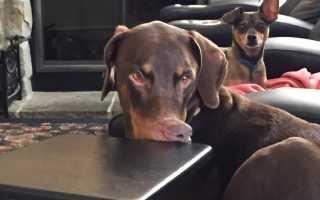 25 собак, которые попали в кадр в нужное время и в нужном месте