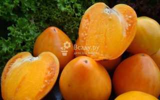 Томат Хурма – характеристика и описание сорта, выращивание и уход